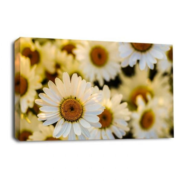 Floral Flower Wall Art Daises Green Cream White Picture Print